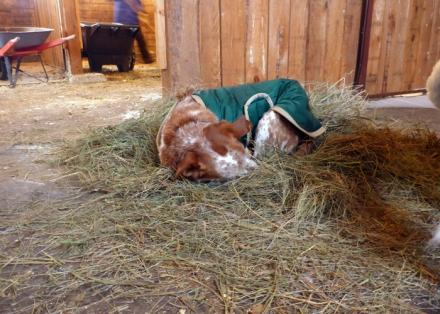 Sleeping in hay