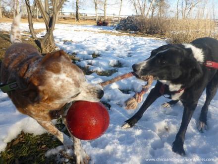 dog-friends-buds