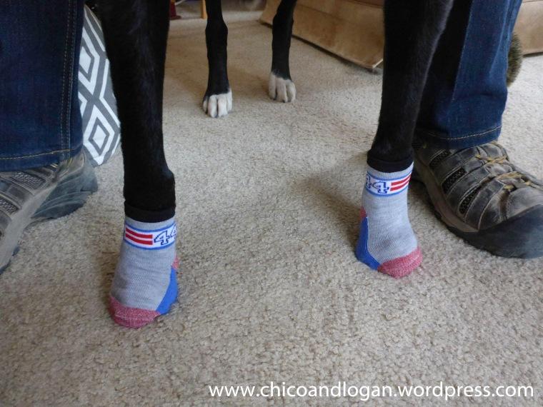 12-trailer-life-socks